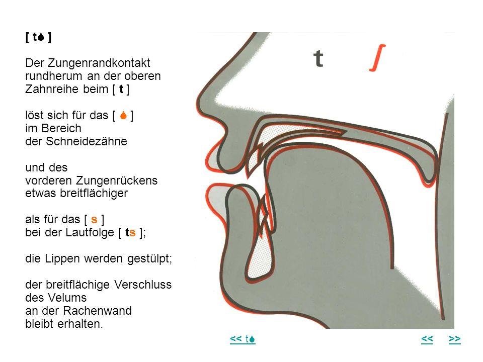Der Zungenrandkontakt rundherum an der oberen Zahnreihe beim [ t ]